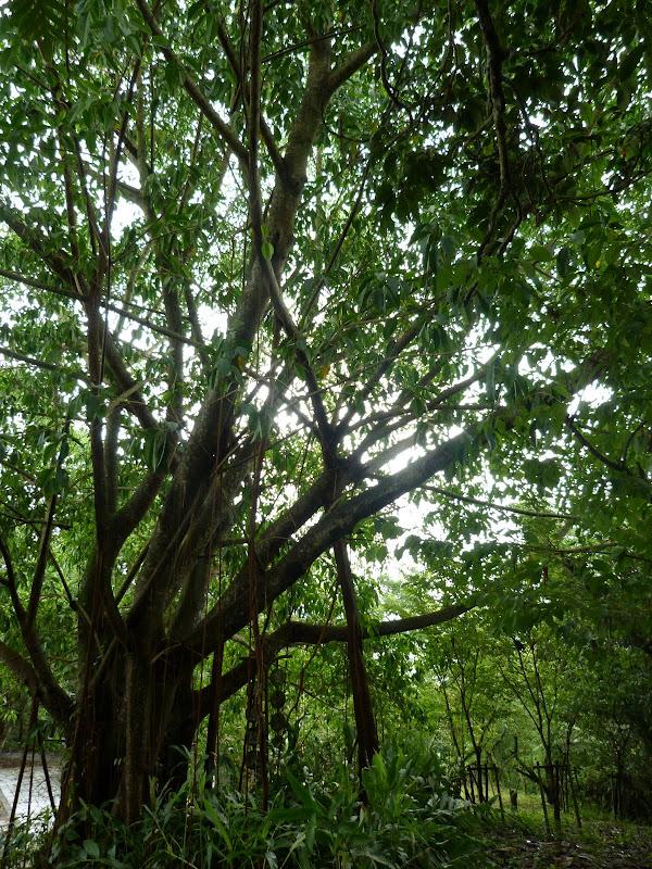 PULI . De Puli a Sun Moon Lake et un village Thao .J 6 - P1150837.JPG