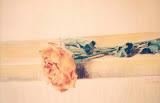 róża, sucha pastela