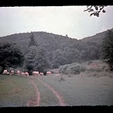 dia060-027-1965-tabor-bakony-ii.jpg