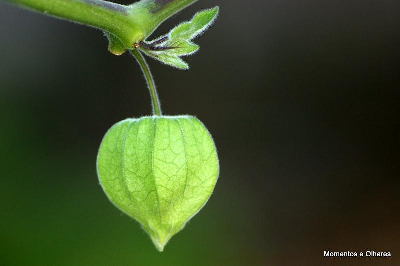 Natureza a verde