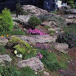 Uređenje dvorišta -alpinetume