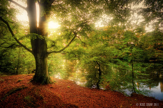 Photo: Good morning G+  I thought I would show you a place I spend too much time at, its called Lymn Dam in Warrington, the paths lead all the way around the water and that magic time between summer and autumn is when the place is at its best.
