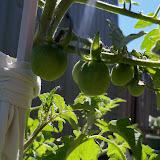 Gardening 2013 - 115_6250.JPG