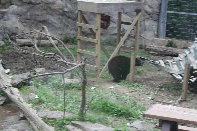 Zoo Snooze 2015 - IMG_7177.JPG