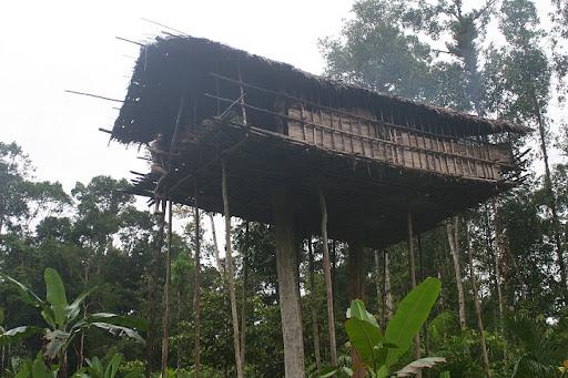 В свои домики на деревьях затаскивают и живность — свиней, собак