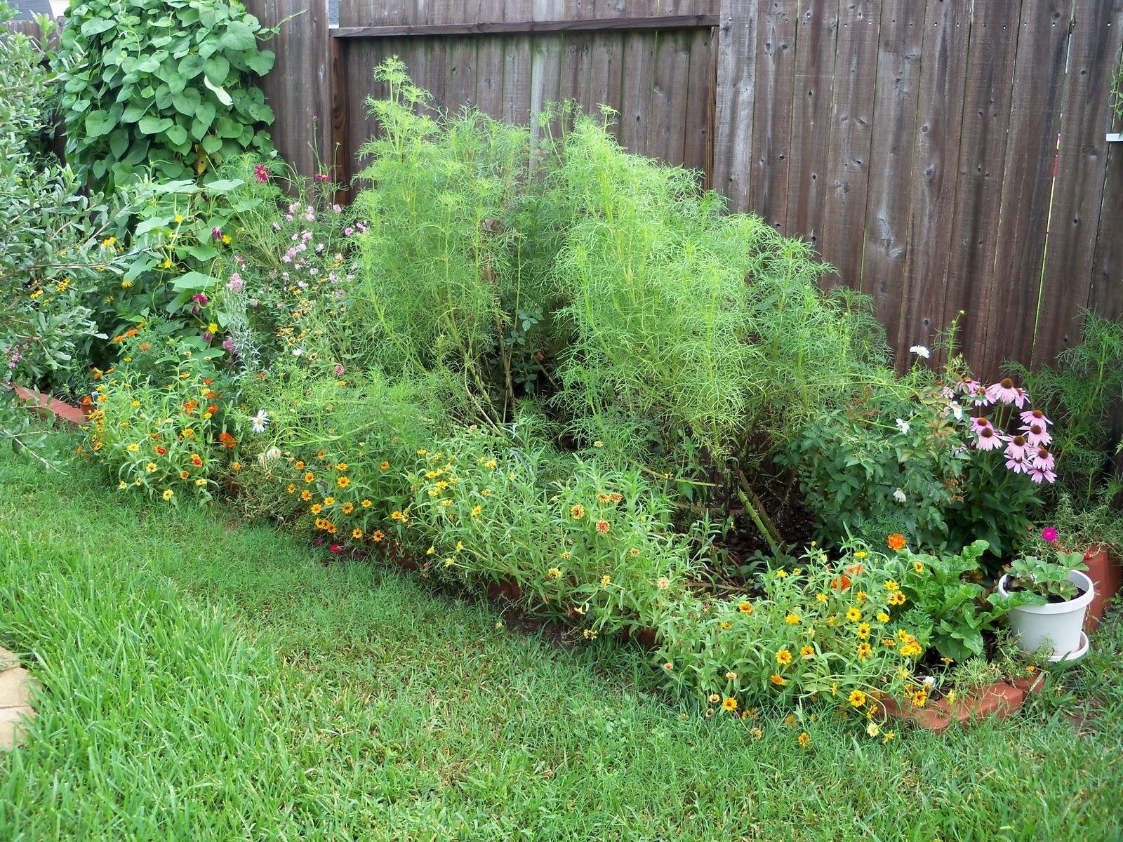 Gardening 2010, Part Three - 101_4737.JPG