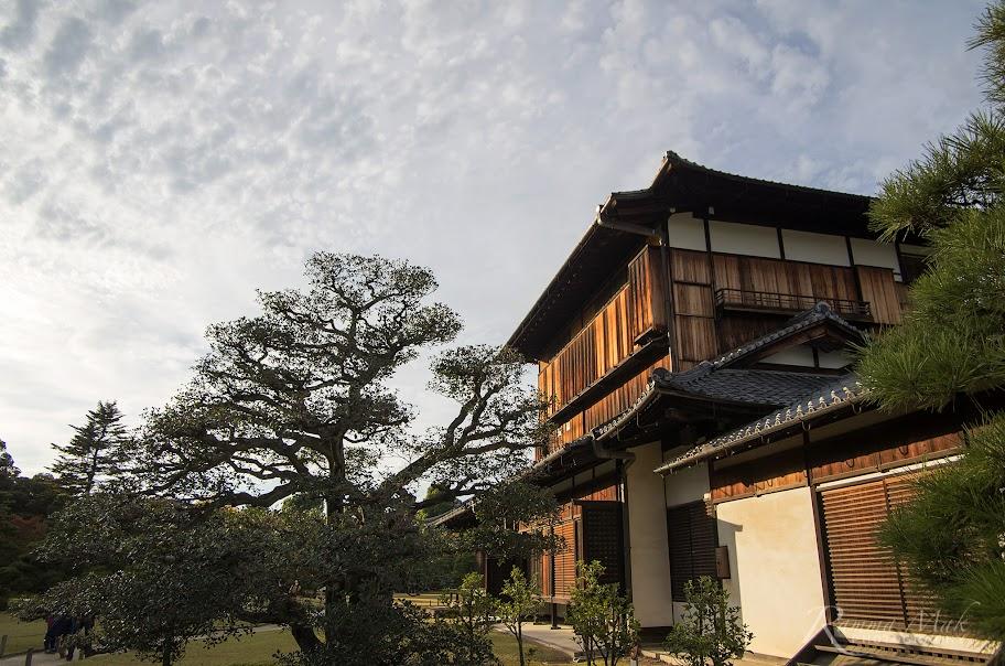 陽光下泛金的木建材
