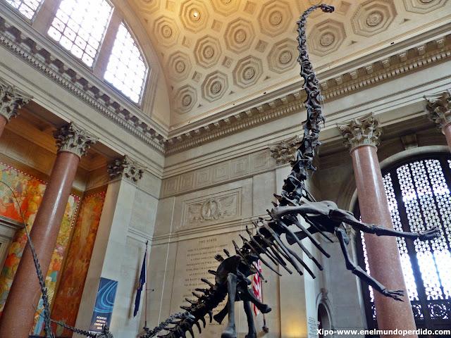 basosaurio-museo-historia-natural-nueva-york.JPG