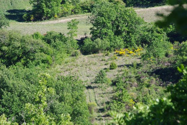 Les Hautes Courennes (460 m), Saint-Martin-de-Castillon (Vaucluse), 14 mai 2014. Photo : J.-M. Gayman