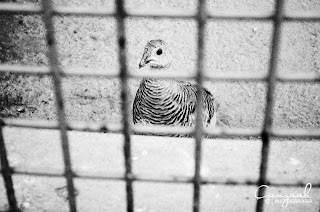 Зоо парк /Photography by Ганзаак/