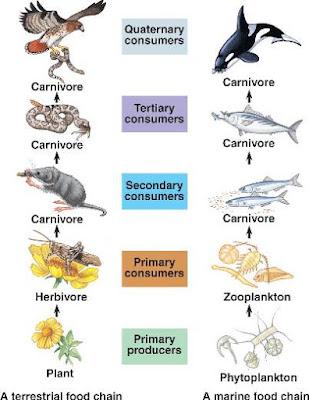 Community Ecology - apbiowiki