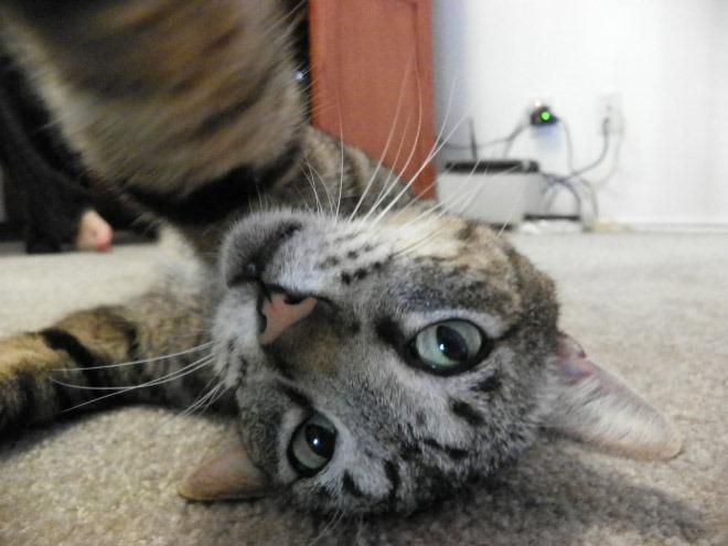 [selfie-gato-95]
