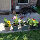 Gardening 2010, Part Two - 101_2517.JPG