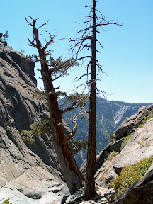 Twin trees at the top
