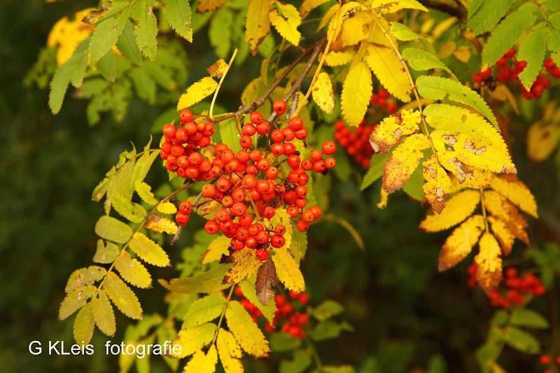 Herfst 2013 - Herfst_2013_087.jpg