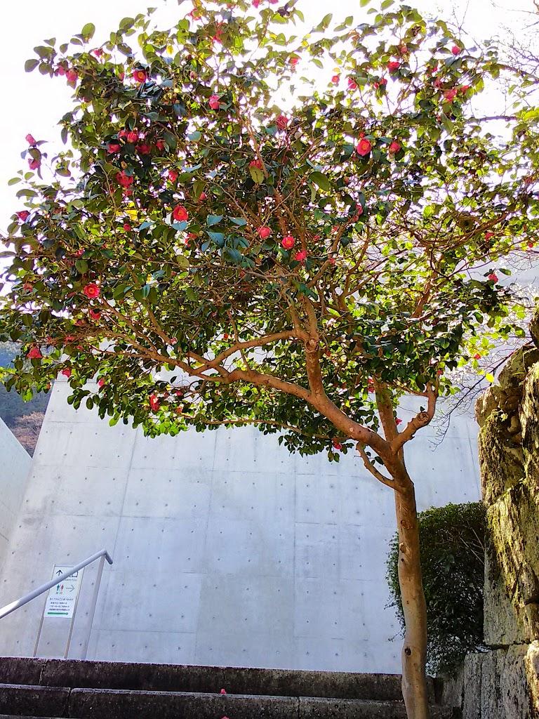 tsubaki-tree