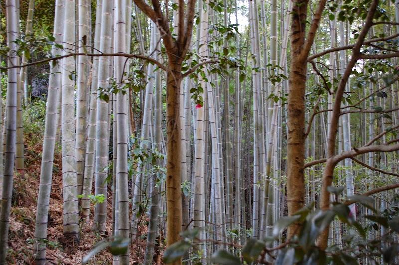 2014 Japan - Dag 7 - jordi-DSC_0352.JPG