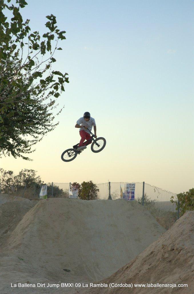 Ballena Dirt Jump BMX 2009 - BMX_09_0149.jpg