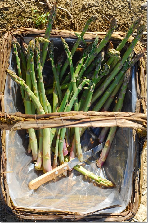 cesto asparagi