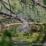 2013 Spring Flora & Fauna - IMGP6416.JPG