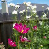 Gardening 2010, Part Three - 101_4445.JPG