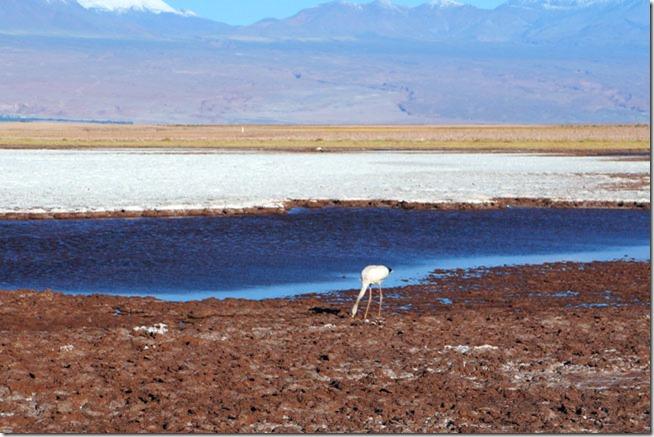 Laguna Tebinquinche, Atacama