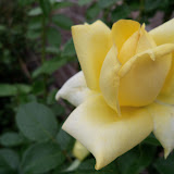 Gardening 2011 - 100_7252.JPG