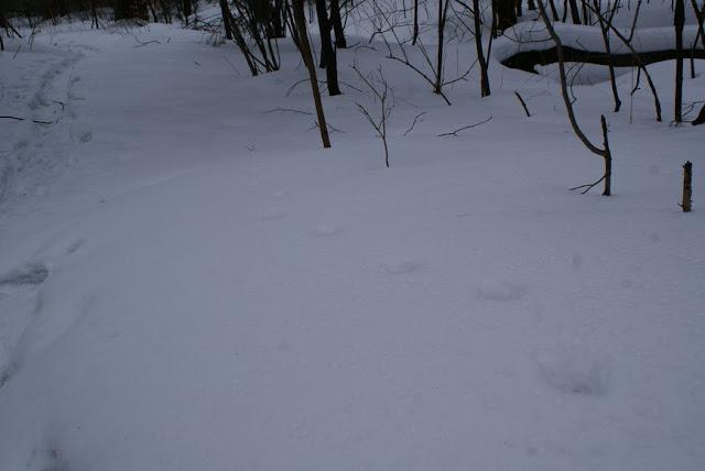 Zajęcia terenowe 29 lutego 2012 - DSC06213_1.JPG