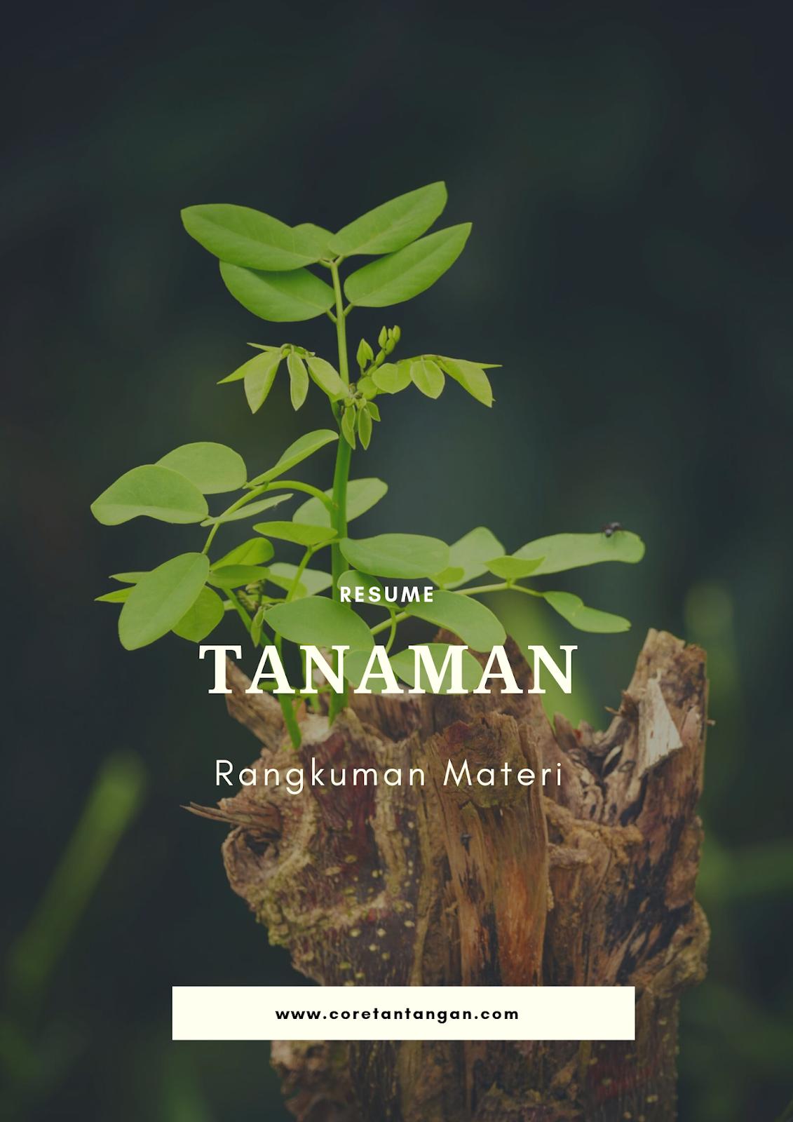 www.coretantangan.com