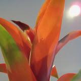 Bouquets - 115_2971.JPG