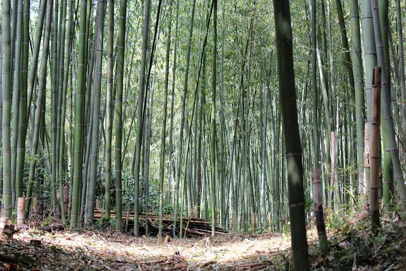 2014 Japan - Dag 8 - marjolein-IMG_1065-0028.JPG