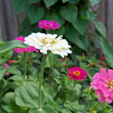 Gardening 2011 - 100_8199.JPG