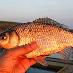 20140404_Fishing_Prylbychi_047.jpg