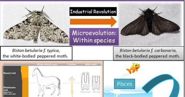 Difference Between Microevolution Macroevolution And Megaevolution