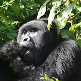 Congo - Parc des Virungas