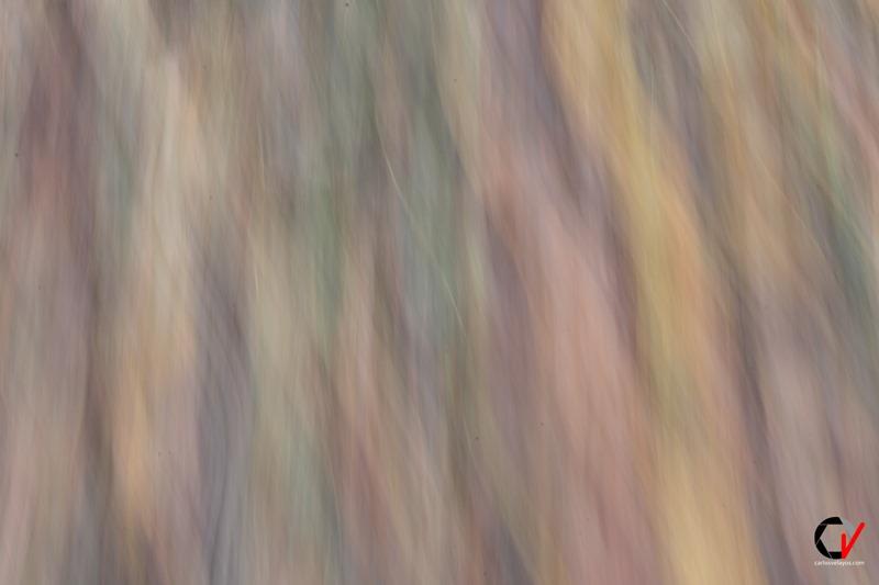 castañar 25-11-18_0122