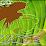 BANANA Leaf Cafe's profile photo
