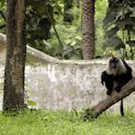 chattbir zoo animals1.jpg
