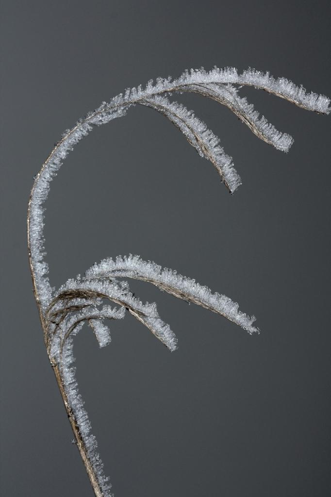 Effe congelata di paolo-spagg