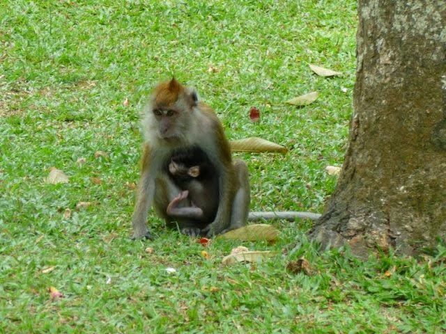 Taman-Botani-Pulau-Pinang-Penang-Botanic-Gardens