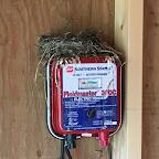 June 10: Swallow nest in goat barn