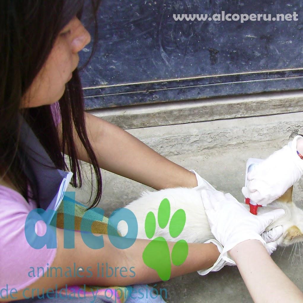 Campaña de asistencia en Mangomarca SJL (15)