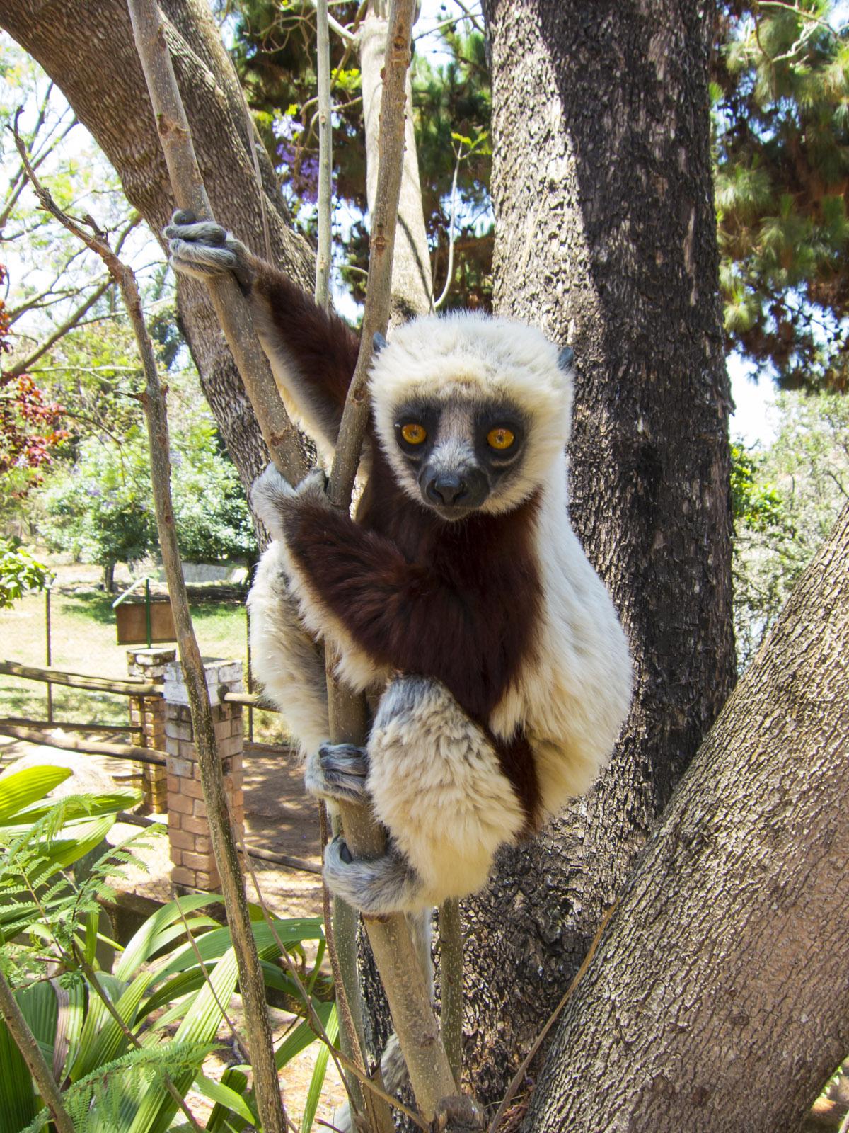 Madagascar9-146.jpg