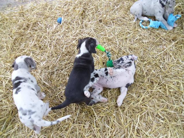 Thelma & Garths 3/21/12 litter - SAM_3351.JPG