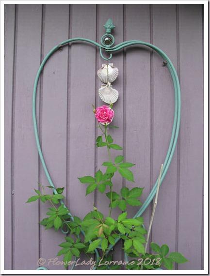 05-22-carnation-rose