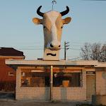 Detroit Cow.jpg