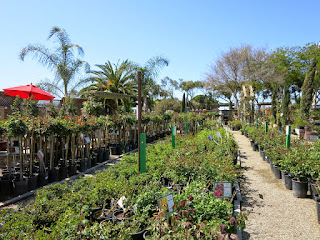 2015 Nursery Photos for website update 3-25-2015 2-04-43 AM 4000x3000