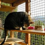 2014-8 gatti