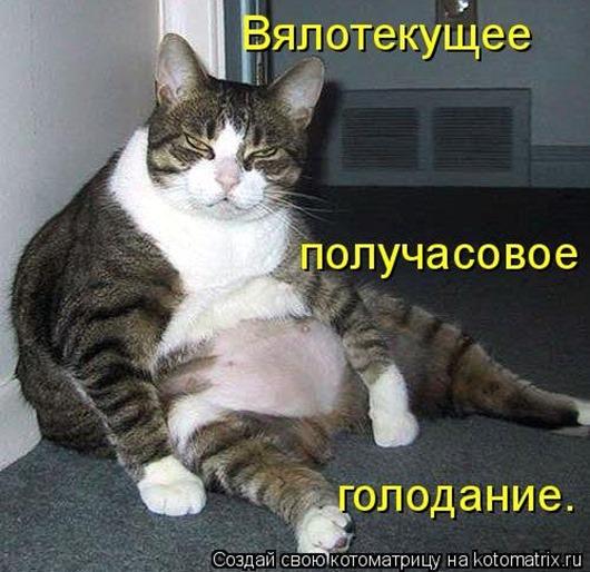 1452279940_kotomatricy-15