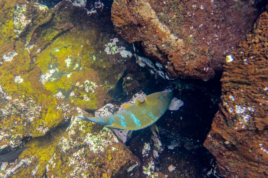 galapagos - Galapagos_FB_2-50.jpg